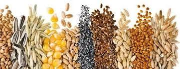 I semi di salute